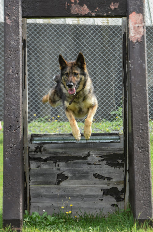 091516 Military Working Dog bites 35th SFS 04_X1200