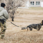 security forces mwd